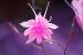 bug-like-flower
